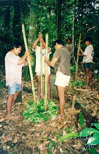 Índios da aldeia Kumarú Novo maceram o veneno Vekamã na floresta, antes da pescaria. Foto: Rodrigo Padua Rodrigues Chaves, 1999.