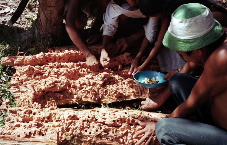Procurando larvas em Ricardo Franco. Foto: Hein van der Voort, 2002