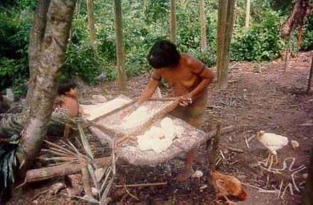 Mulher Guajá do Posto Indígena Guajá, TI Alto Turiaçu, ralando mandioca. Foto: Louis Carlos Forline, 1998.