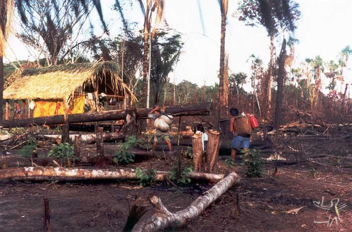 Retorno à aldeia depois da coleta de açaí. Foto: Edmundo Peggion, 1999