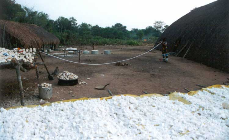 Mandioca a ser processada para a alimentação dos participantes do Egitsu (Kwarup). Foto: Beto Ricardo, 2002.