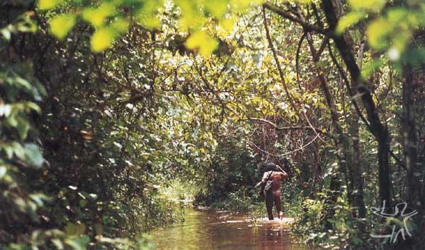 Durante a estação chuvosa, as expedições pela floresta tornam-se mais difíceis. Foto: Gustaaf Verswijver, 1991.