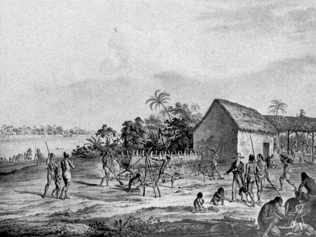 Porto dos Miranhas, rio Japurá. Imagem: Spix e Martius, século XIX.