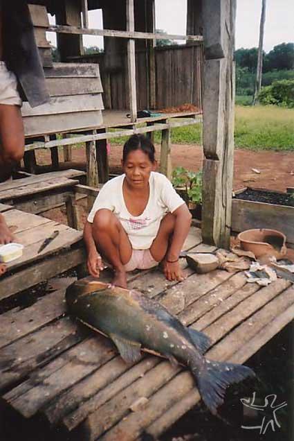 Mulher Paumari com tambaqui na aldeia Araçá (Paumari do Rio Ituxi). Foto: Peter Schröder/PPTAL, 2000