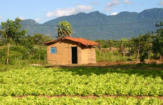 Horta Comunitária do Horto. Foto: Joceny Pinheiro, Julho 2006, Maracanaú-CE