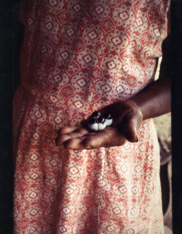 Floriza com o guaraná, rio Marau. Foto: Sônia Lorenz, 1978.