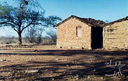 Caatinga em época de estiagem. Foto: Ugo Maia, 1998.