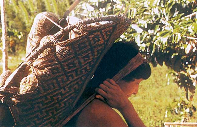 O weiepe, conhecido também por jamaxi, é um dos artefatos tradicionais dos Waimiri Atroari, confeccionado pelos homens e usado pelas mulheres para transportar produtos da roça. Fotos: Sérgio Cleto, 1999.