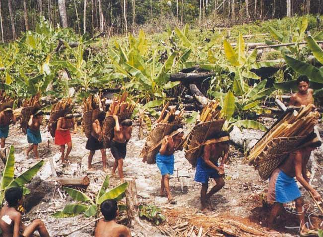 Cabe às mulheres providendiar lenha. Foto: Henrique Cavalleiro, 1999.