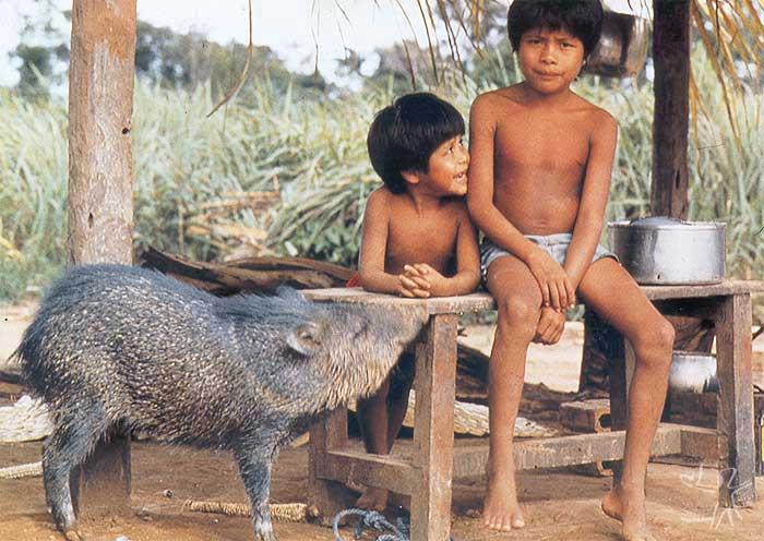 Meninos com queixada. Aldeia Rio Negro Ocaia, Rondônia. Foto: Beto Barcelos, 1987