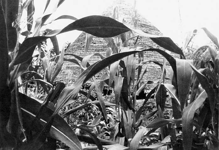 Maloca zuruahã no Igarapé do Coxodoá. Foto: Gunter Kroemer, 1984.