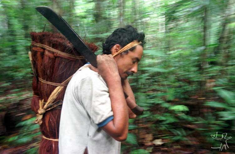 Carregando a fibra de piaçava. Foto: Paulo Santos/Interfoto, 2000.