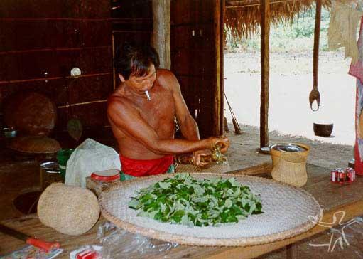 Preparando ipadu. Foto: Jorge Pozzobon, 1997