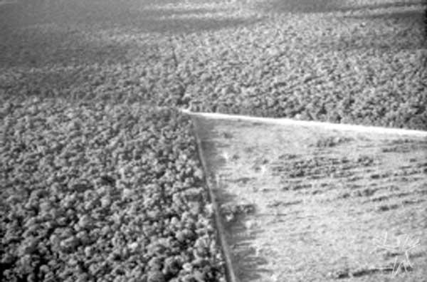 O desmatamento das fazendas avança em direção aos limites do Parque, afetando as cabeceiras dos formadores do Xingu e comprometendo sua sustentabilidade futura. Foto: Pedro Martineli, 1999.