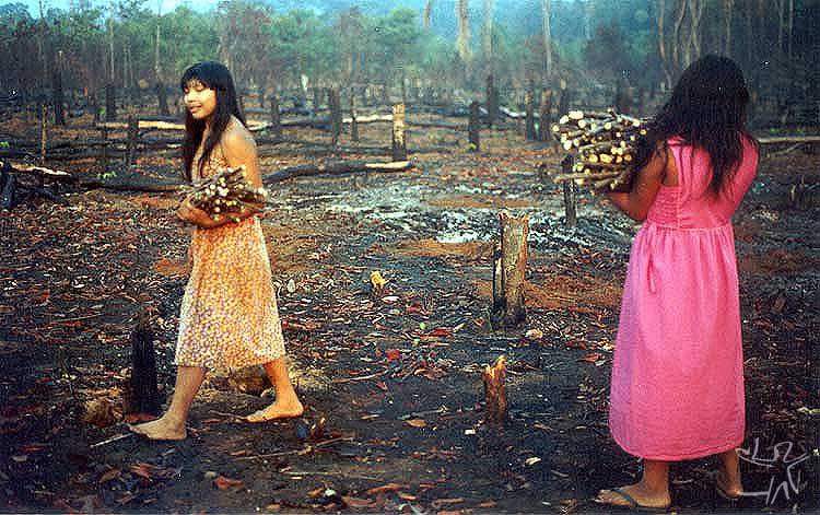 Pakairu Wauja plantando ramas de mandioca na aldeia Piyulaga. Foto: Camila Gauditano, 2002.
