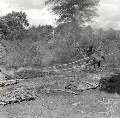 Canela Ramkokamekrá espalham pedras quentes com varas compridas antes de jogar berabas de mandioca sobre elas. Foto: William Crocker, 1960.