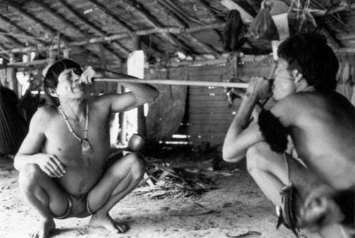 Na maloca Toototobi, dos Yanomami (AM), homens realizam sessão com o pó alucinógeno, yãkuãna. Este é muito presente na iniciação dos pajés yanomami, e deve sempre se dar sob a condução dos mais velhos. Foto: Milton Guran, 1991.