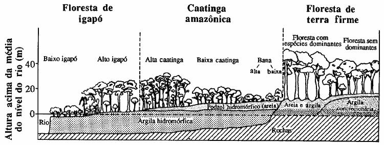 Gradiente de vegetação no Rio Negro. Ilustração: Clark and Uhl, 1987.