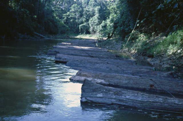 Escoamento de toras de madeira dos altos rios, rio Javari, Terra Indígena Vale do Javari, Amazonas.