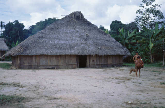 Casa familiar dos matsés, igarapé Lobo, Terra Indígena Vale do Javari, Amazonas.