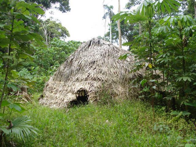 Morada Korubo, Terra Indígena Vale do Javari, Amazonas. Foto: Ananda Conde