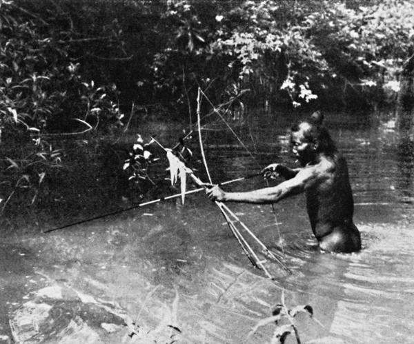 Com rijas cacetadas, os Umutina trituram os feixes de cipó-timbó, que se esfacelam rapidamente. O feixe de cipó-timbó triturado é sacudido na água. Desprende-se uma seiva de côr branco-azulada como espuma de sabão, que asfixia os peixes. Apesar disso, são