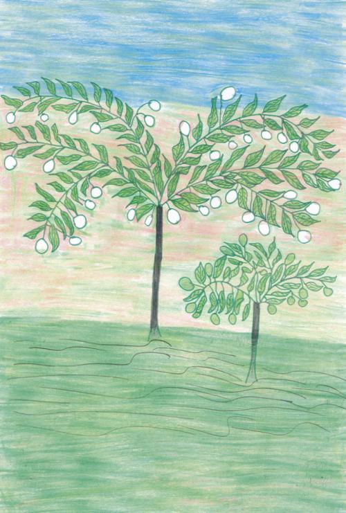 Pé de algodão. Desenho de Krekreasã Panará. Fonte: Ecologia, Economia e Cultura (1), 2005. Atix/ISA.