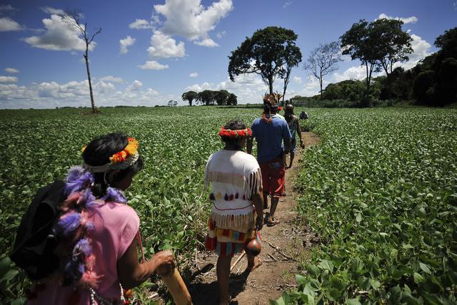Índios Guarani-Kaiowá no caminho da roça. Foto: Marcello Casal Jr/ABr.