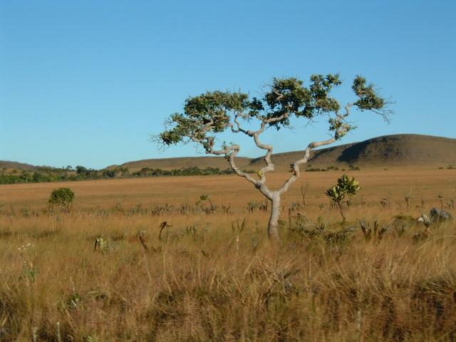 Paisagem típica do Cerrado. Foto: Júlia Trujillo.