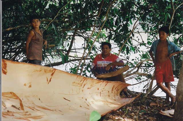Apiaká fabricando canoa de casca de pau às margens do Rio dos Peixes. Imediações da aldeia Mayrob, Terra Indígena Apiaká-Kaiabi, Juara, Mato Grosso. Foto: Giovana Acacia Tempesta, 2007.
