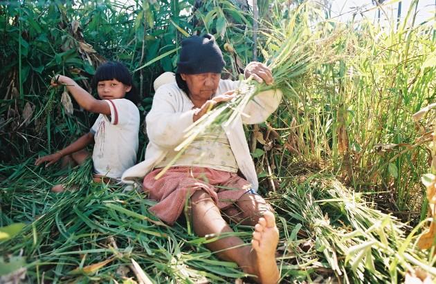 Mulher xavante ensina sua neta recolher sementes de capim para confeccionar colares e enfeites. Aldeia Wederã, MT. Foto: Camila Gauditano