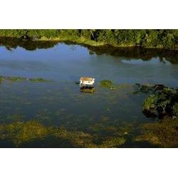 RESEX Verde Para Sempre, Porto de Moz - PA 2006  / Leonardo F. Freitas