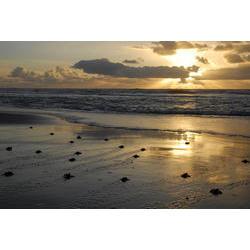 Após a eclosão dos ovos, os filhotes dirigem-se para o mar aberto, aonde vivem os primeiros anos de vida. Nessa fase da vida ocorrem os índices de mortalidade mais altos. Na foto, o entardecer em Pirambu (SE).  / Projeto TAMAR