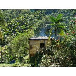 Habitação tradicional e ao fundo bananal orgânico, Quilombo de Ivaporunduva. 20070726  / © Marcos Gamberini/ISA