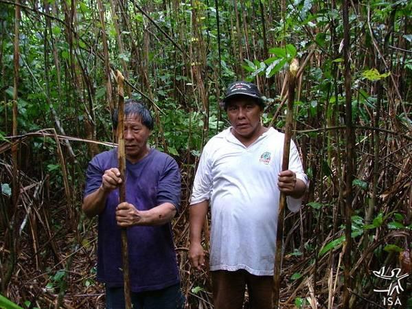 Homens naruvotu no local de extrativismo de taquaras para confecção de flechas e de caramujos para confecção de colares, Terra Indígena Pequizal do Naruvotu, Mato Grosso. Foto: Emerson Guerra, 2005