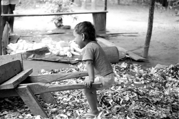Produção de farinha de mandioca em Sapucaeira. Foto: Susana Viegas, 1998.