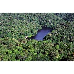 Parque Nacional do Jaú (AM)  / Araquém Alcântara - www.terrabrasilimagens.com.br