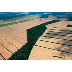 / Araquém Alcântara - www.terrabrasilimagens.com.br