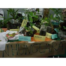 Realizada no Vale Ribeira (SP), a Feira de Troca de Sementes e Mudas incentiva troca de etnovariedades agrícolas, fortalecendo a envolvimento comunitário, conservação da biodiversidade e a segurança alimentar. 2009  / Silvia Futada