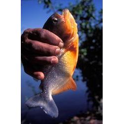 PARNA do Araguaia (TO) - localiza-se em uma região onde a abundância de peixes torna a pesca uma importante atividade local. 1996  / ROBERTO LINSKER/www.terravirgem.com.br