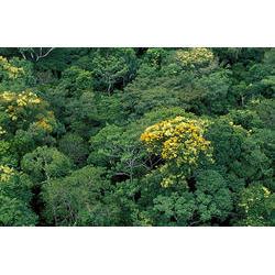 FLONA de Carajás (PA): Localiza-se em uma das maiores área de reserva de recursos minerais do mundo, são reservas gigantescas de ferro e manganês.  / Araquém Alcântara - www.terrabrasilimagens.com.br