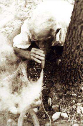 O pajé tumbalalá defuma raiz de jurema antes de extrai-la a fim de preparar guias e vinho. Foto: Ugo Maia, 2001.